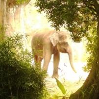 elephant portland